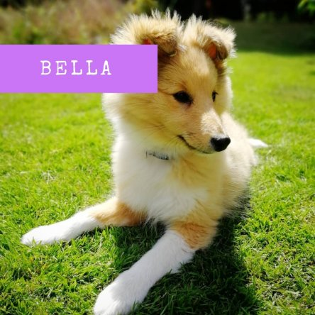 Personal Message from my dog Bella