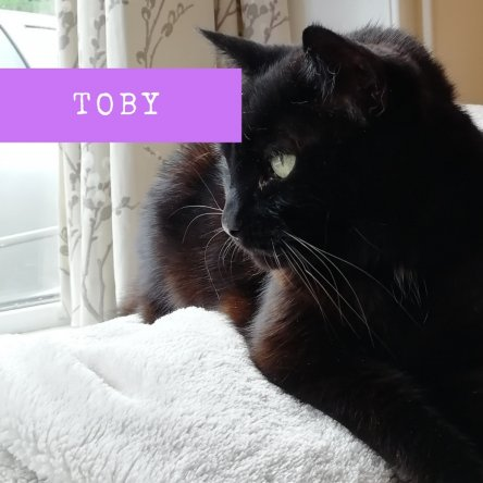 Personal Message from my cat Toby
